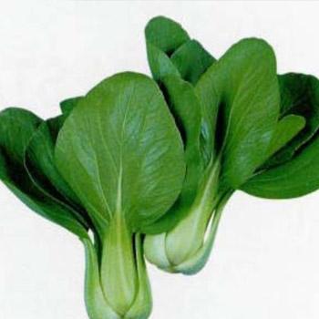 PAK CHOI GREEN OP Image